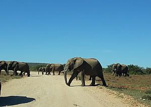 Elefanten an der NMU