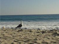 Strand in der Nähe der CSU San Marcos
