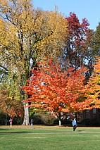 Der OSU Campus im Herbst