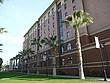 Palmen an der San Jose State University