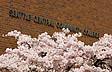 Kirschblüten vor dem Hauptgebäude des Seattle Central Community College