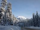 Schneebedeckte Tannen in Kanada