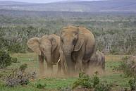 Wildlife in der Nähe der Nelson Mandela Metropolitan University