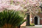 Pflanzen auf dem Campus der Mercer University