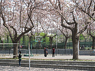 Frühlingstag auf dem Campus der Dongbei University of Finance and Economics