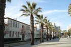 Palmen und der Campus der SJSU